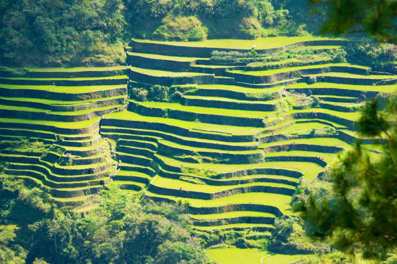 Rice terraces in rural Philippines