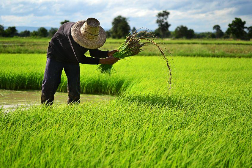 Farmers Auto Insurance >> Oxfam uses blockchain to empower Cambodian rice farmers - Ledger Insights - enterprise blockchain