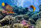 tropical fish planet