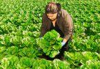 Walmart lettuce food traceability