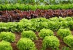 food traceability lettuce leafy greens