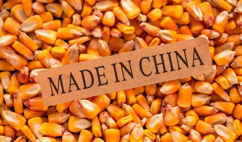 corn china