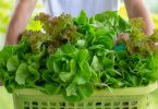 food traceability lettuce