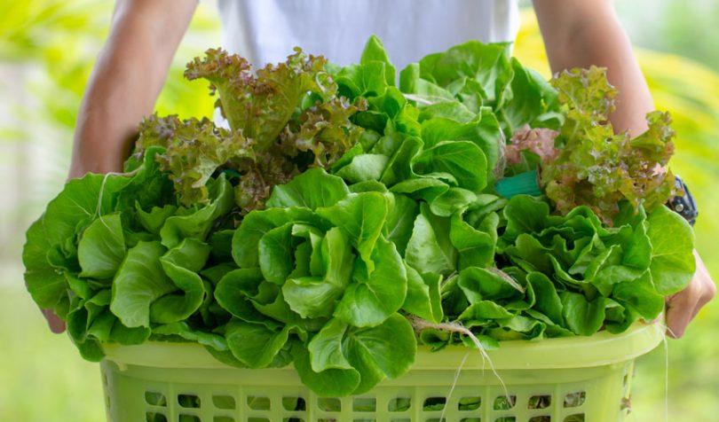 food traceability lettuce