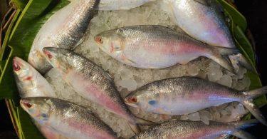 fish traceability