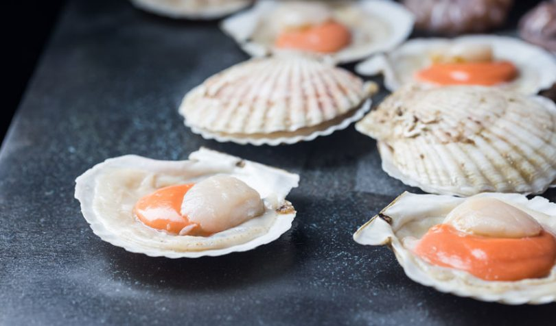 scallops shellfish