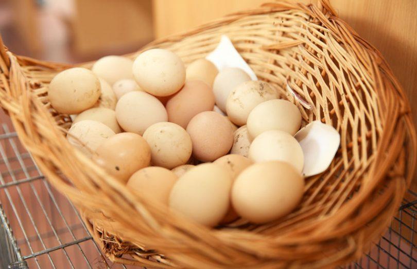 eggs food traceability