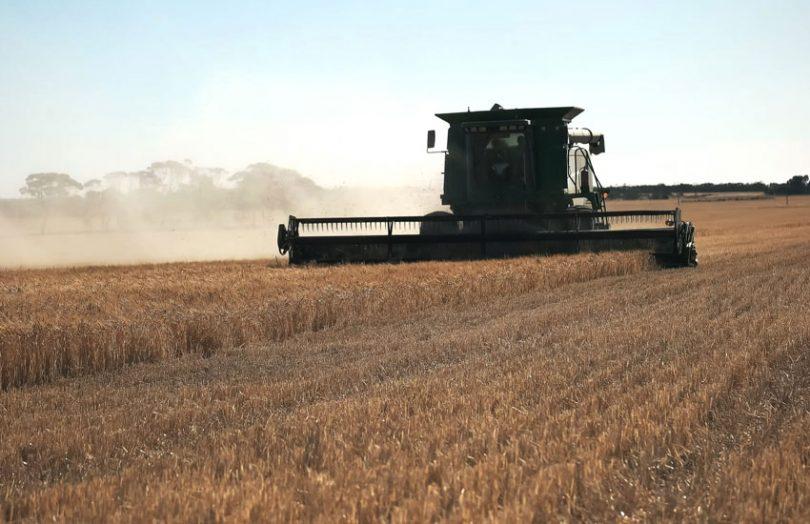 grain harvest australia