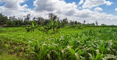 kenya crops