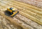 wheat harvest grain