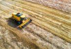 wheat harvest grain