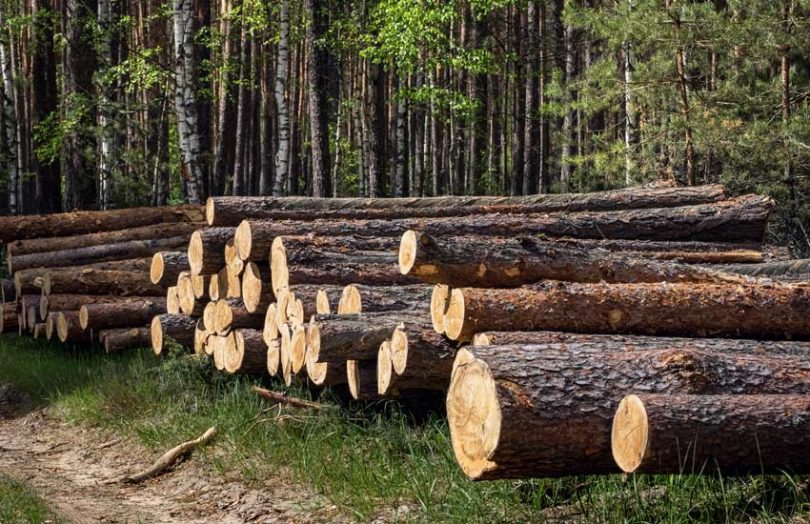 wood timber lumber