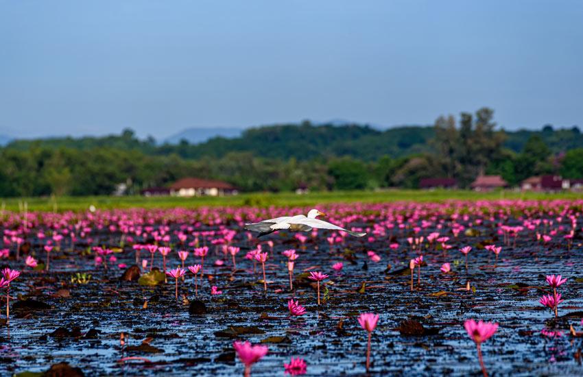 wetlands carbon credit climate change