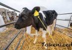 tokenized cow tokenization